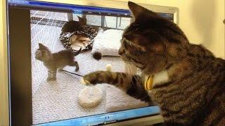 Кошка смотрит видео со своими котятами