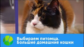 Выбираем питомца с Алексеем Ягудиным. Большие домашние кошки