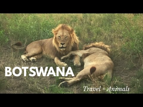 TRAVEL VLOG: BOTSWANA (SAFARI)