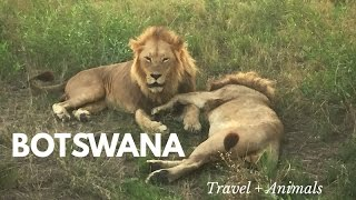 TRAVEL VLOG: BOTSWANA (SAFARI)