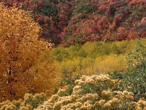 Discovering a 'Singing' Tree - Bernie Krause