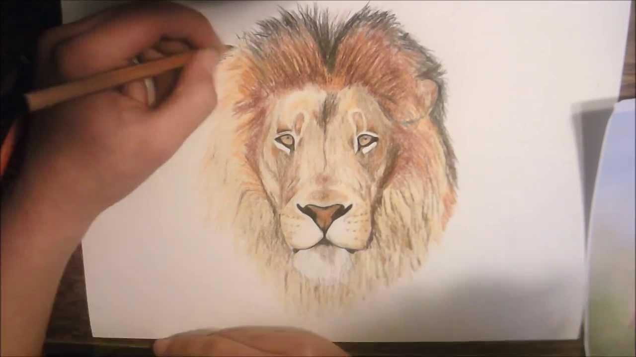 Lion dessin 2 - YouTube