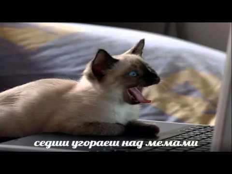 Мем с котом своими руками