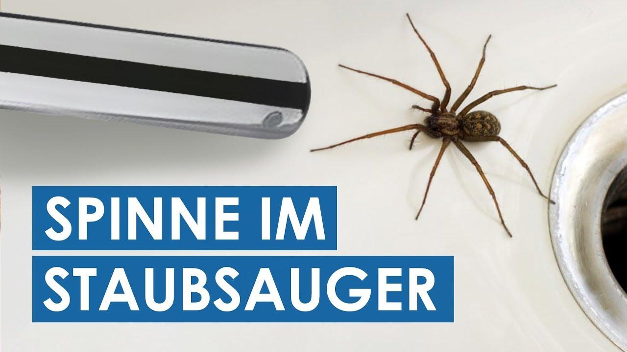 Uberleben Spinnen Im Staubsauger Oder Sterben Spinnen Im Staubsauger