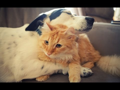 Cats and Dogs Love Each Other 2014 [NEW HD]