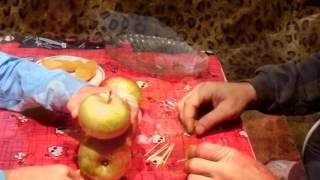 делаем гусеницу из яблок. Семья Чувильских