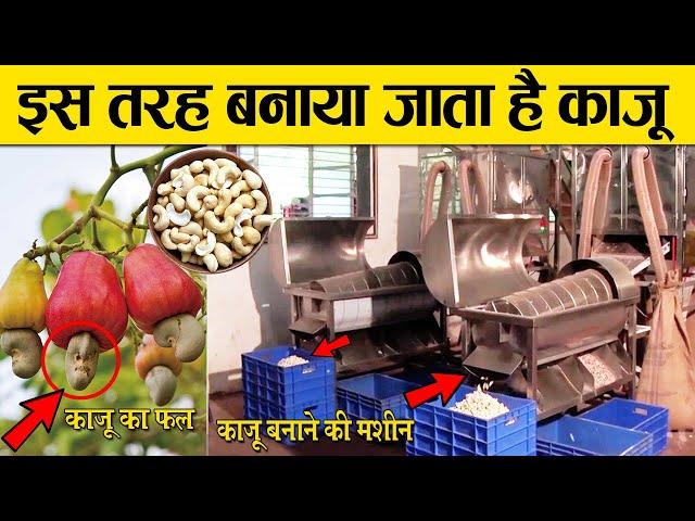 काजू कैसे बनता है ?   kaju kaise banta hai   How to make cashew nut