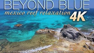 """BEYOND BLUE"" 4K Mexico Reef Relaxation Nature Video 1 HR UHD"