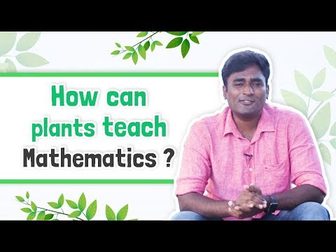 How can plants teach you mathematics?