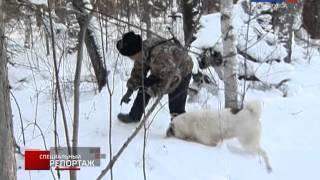 видео: Специальный репортаж. Охотники