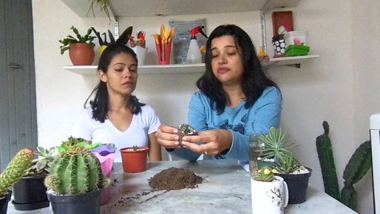 Como Cuidar De Cactos E Suculentas Por Leyla Silva