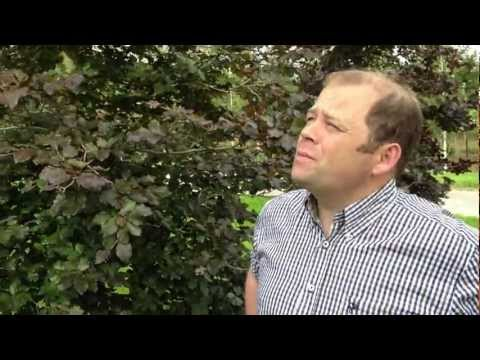 Fagus Sylvatica Atropurpurea - the Copper Beech - Irish Tree Centre Review