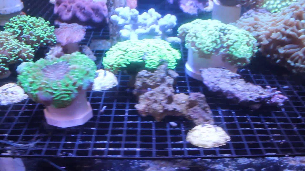 Captain Nemo s Aquarium Superstore 001