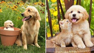 Animals Mothers  beautiful, happy and meaningful moment of animal family #4