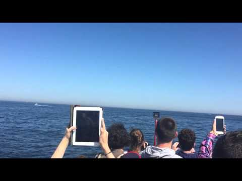 Whale Watching | New England Aquarium | Boston Harbor Cruises