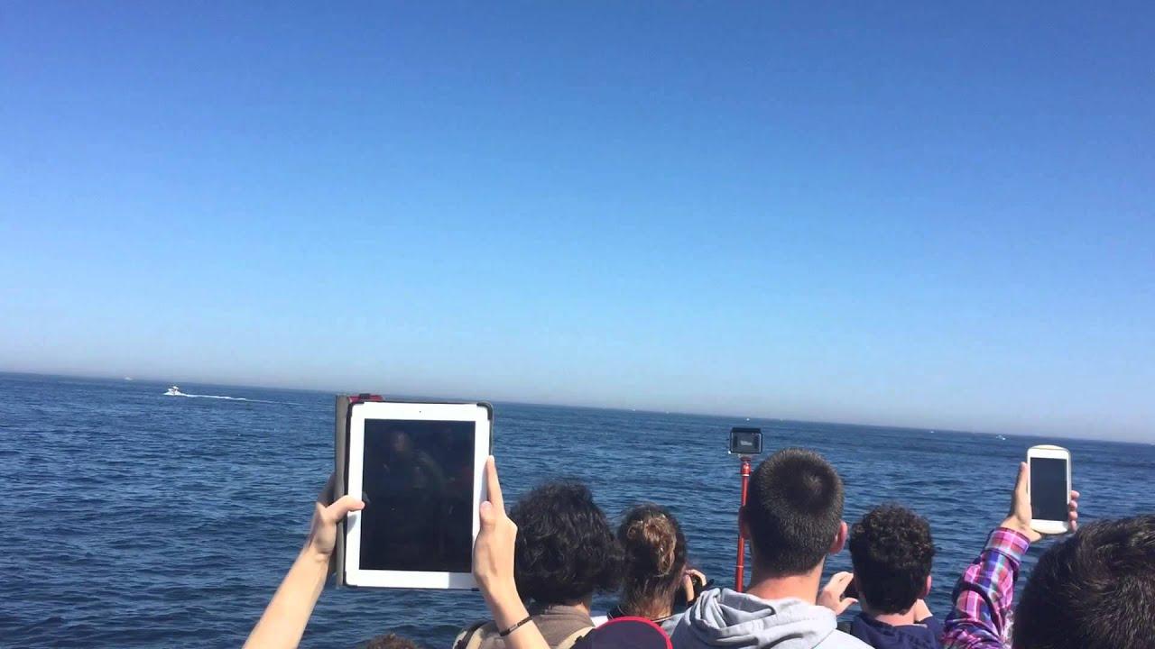 Whale Watching New England Aquarium Boston Harbor Cruises