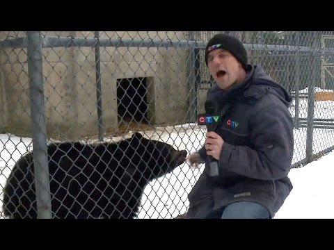 'Little bear' teaches CTV reporter a lesson to remember