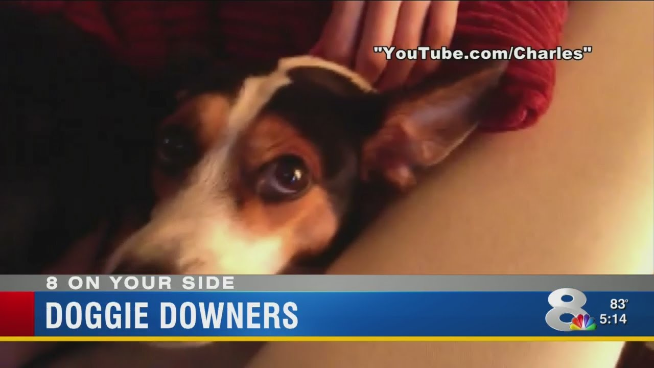 doggie downers youtube