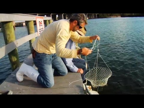 How to Catch Blue Crabs