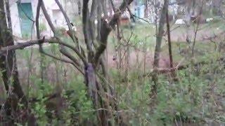 Купить дачу, участок в Чернигове. Видео. Садовое общество