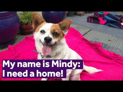 adopt-mindy- -dogs- -mayhew