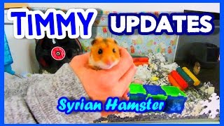TIMMY Updates | Syrian Hamster Thumbnail