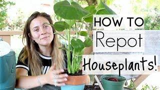 How To Repot Houseplants! | Repotting Houseplants