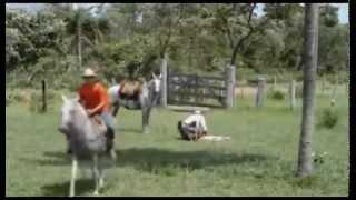 Cavalo Branco {Zé Fortuna & Pitangueira} Edivan