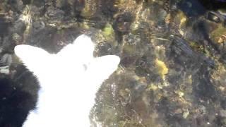 whiteshepherd ALBA シロクマの子グマ アルバの誕生! 2011.07.10 No,1.