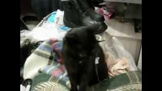 Желающие помочь слепой кошке