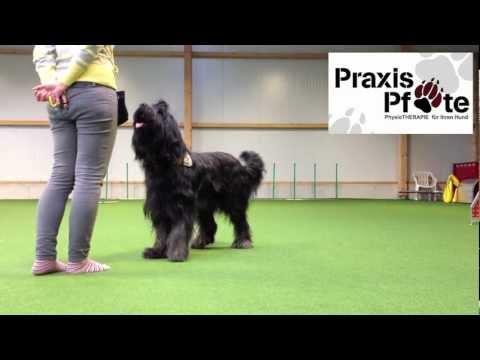 Warming-Up bungen fr Sporthunde