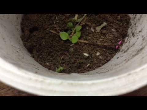 Маленькие домашние муравьи:)