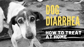 Diarrhea Dogs How Quickly Treat Home