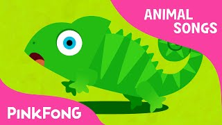 Hide 'n Seek | Animal Songs | PINKFONG Songs for Children