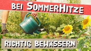 Hitzewelle 2019 - So rettest Du Deine Pflanzen!