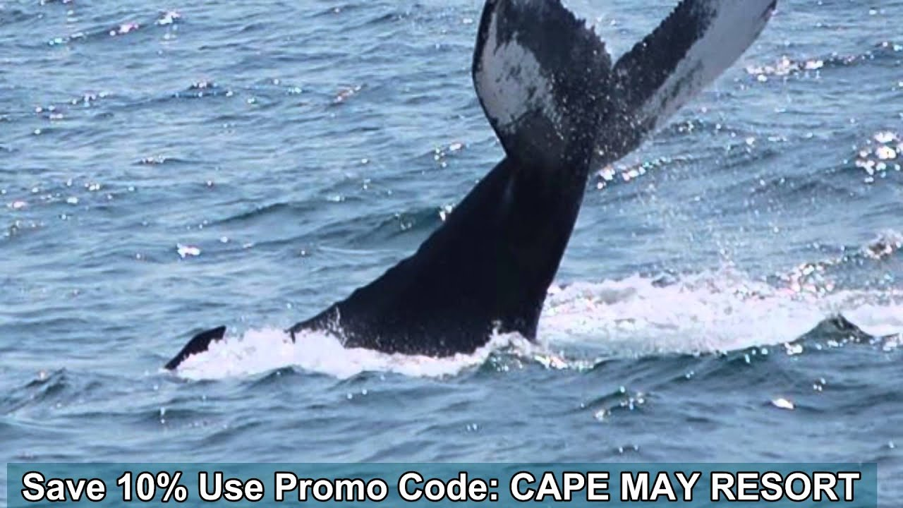 Whale watching coupons