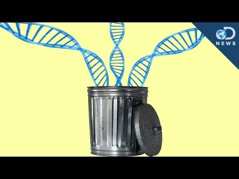 98% of Your DNA is Junk