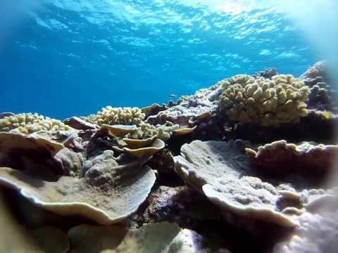 Olosega - Swains Island 2013