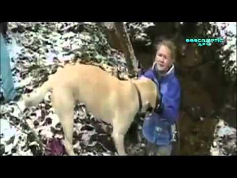 Clip hài hước về những chú chó thugian.tso.vn.flv