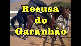 Recusa do Garanhão Turbante JO - Stallion with feeling - www.horsetv.com.br