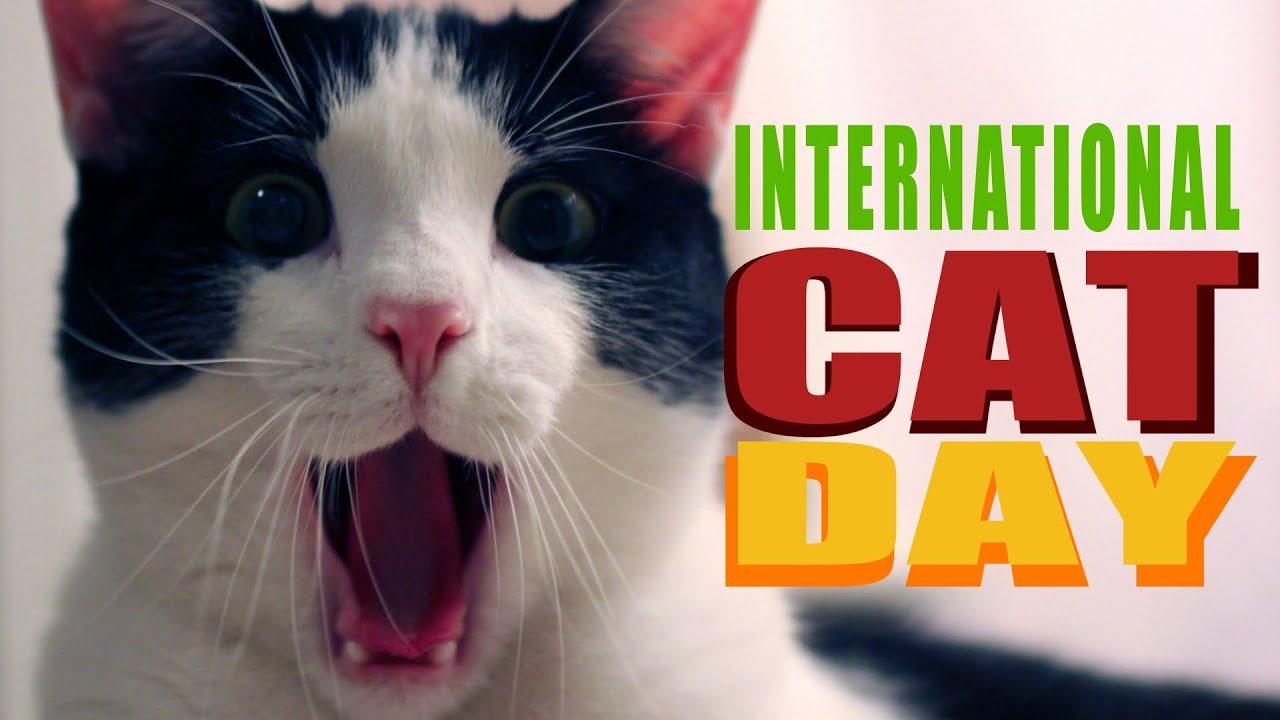 international cat day - photo #16