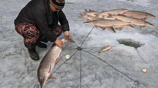 ШОК РЫБАЛКА Трофейные ЩУКИ сами лезут в снасть Весенняя рыбалка 2021