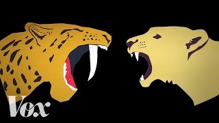 Repeat youtube video How saber-toothed cats grew their mouth swords