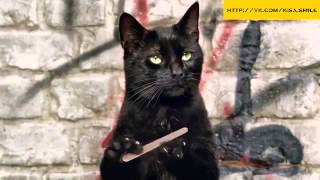 Прикольная реклама молока Kisa Smile Прикольные фото и видео с кошками