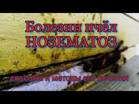 Болезни пчёл. Нозематоз. Способы и методы его лечения.Nosema Apis. Bee Diseases.Nosematosis.