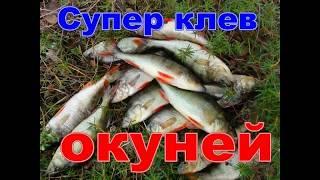 Рыбалка Ловля окуня на спиннинг с лодки Hs fkrf Kjdkz jreyz yf cgbyybyu c kjlrb