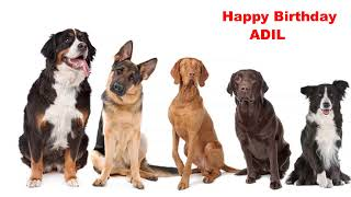 Adil - Dogs Perros - Happy Birthday