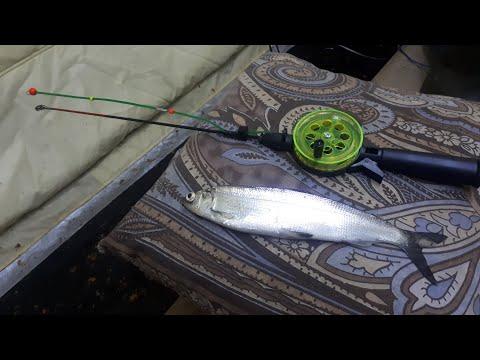 Спортивная ловля рипуса со льда на лампочку