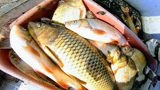 Кастинговая сеть рыбалка 2020 осень или как я наловил ванну рыбы и придавил сазаном и щуканами ЁКЛМН