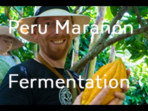 Chocolate Tree in Peru: Marañón Canyon Part 2